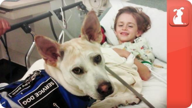 chien prévenant une crise épileptique
