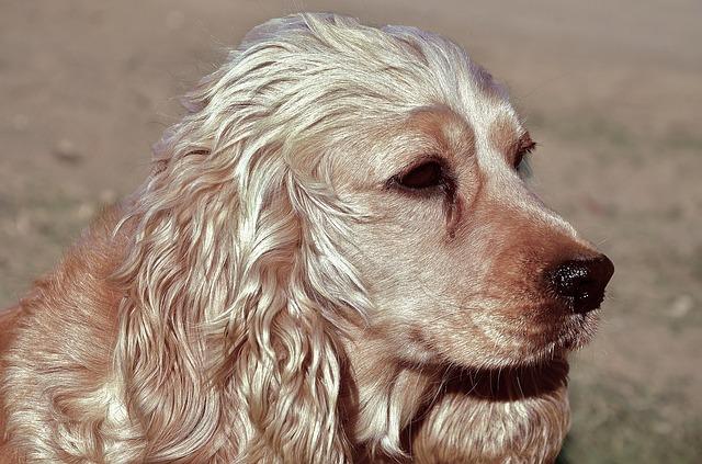 chien thérapeute